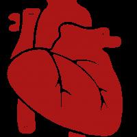 kardio_logie_heart_frontpage